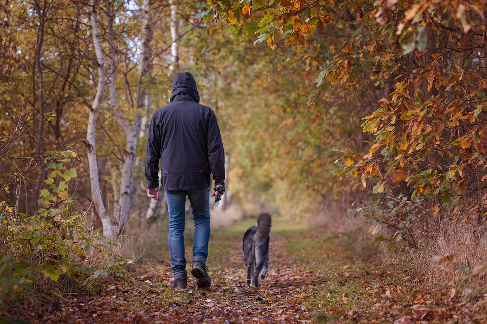 Autumn Dog Walks